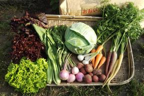 季節のお野菜セット(Lサイズ)