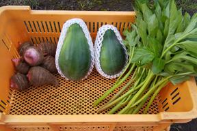 青パパイヤと三宅島地の野菜セット