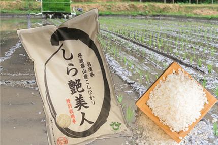 お米マイスターが作る旨みたっぷりの丹波篠山米10㎏【新米R1年産】10kg