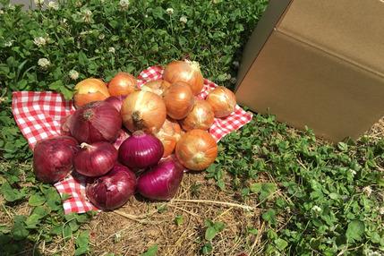 【古都奈良の農薬不使用野菜】赤玉ねぎ・新玉ねぎの2種計5キロセット!