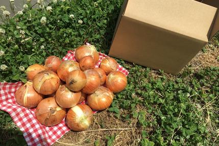 【古都奈良の農薬不使用野菜】新玉ねぎ5キロ!