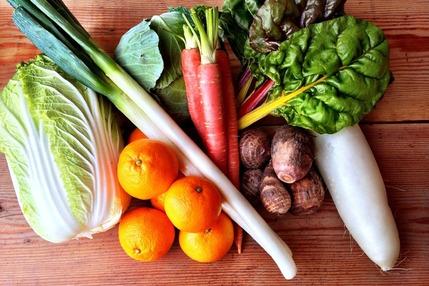【ゼロエネルギーCO2フリー】自然農野菜セット【Lサイズ】