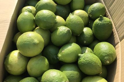 瀬戸内香りのよい青レモン  3kg Mサイズ以上