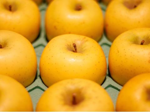 シナノゴールド(3㎏) 長野生まれのサクサク黄りんご