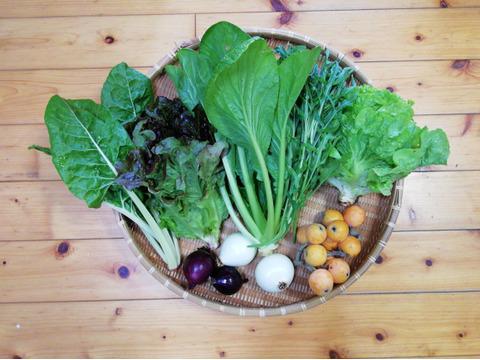 【限定1箱】完熟ビワと野菜のセット(農薬・化学肥料不使用)5~7種類(60サイズ箱)