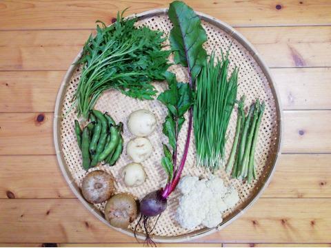 【農薬・化学肥料不使用】【クールで対応】野菜セット【必ずワイルドルッコラ(ワイルドロケット)入り】【6~8種類の野菜】【60サイズ箱】
