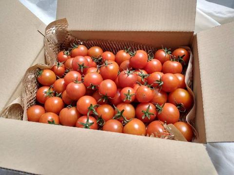 ご家庭用キズもの込み・イスラエルの中玉トマト・ダルシモール★計1.3kgバラ詰