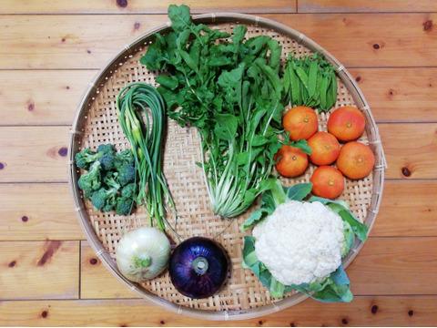柑橘(ジュースに最適なセミノール)付き野菜セット(60サイズ箱)(すべて農薬・化学肥料不使用)