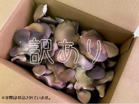 お得な訳あり黒あわび茸(150g×12袋)