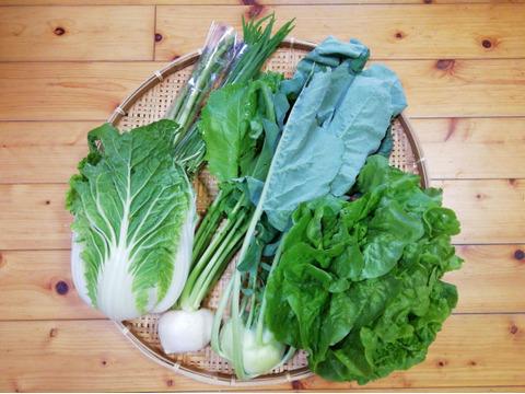 【限定4箱】野菜セット(農薬・化学肥料不使用)6~8種類(80サイズ箱)