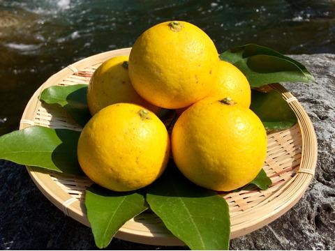 【高知県産】自然栽培・夏空の小夏 5㎏