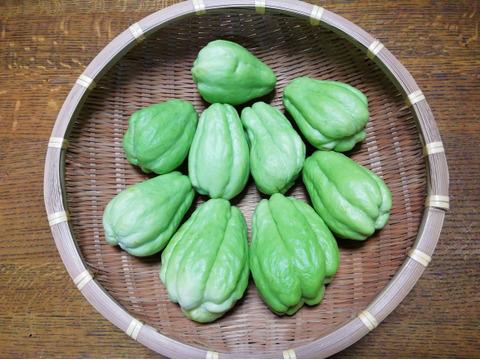 「ハヤトウリ」(2.4㎏前後、料理レシピ入り、農薬・化学肥料不使用)酢の物やきんぴら、炒め物、ポタージュに)