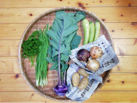 【農薬・化学肥料不使用】【クールで対応】野菜セット【必ず新タマネギ入り】【6~8種類の野菜】【60サイズ箱】
