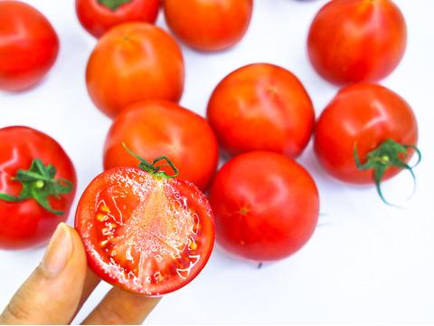 【規格外・お試し750g】コクと旨味をギュっと濃縮!フルーツトマト【冬~春が旬!】