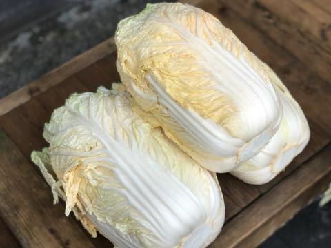 noriko shibata様専用 《訳あり》オレンジクイン・紫白菜