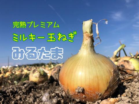 激甘「七宝」‼️淡路島産玉ねぎ 5kg