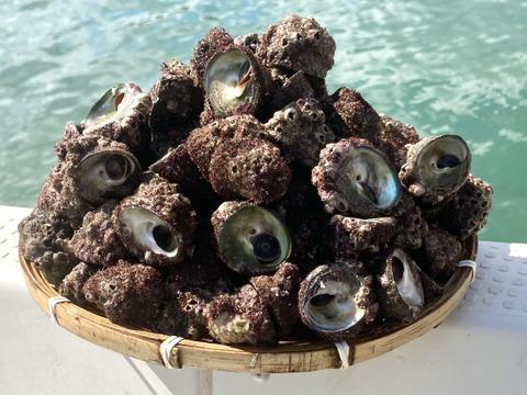 【間もなく終了】ニナ貝 2kg【約110~120個】「蜷貝(にながい)」貝好き必見🐚