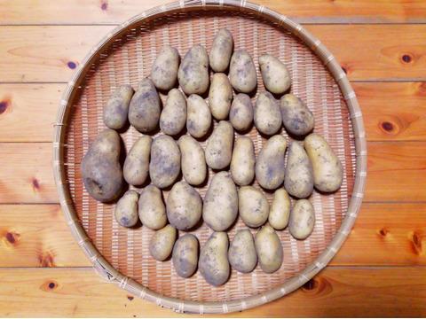 ジャガイモ(メークイン)(農薬・化学肥料不使用)3㎏