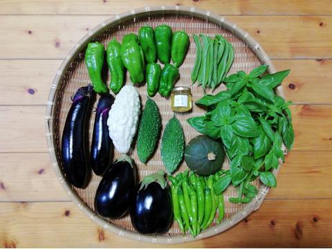 【農薬・化学肥料不使用】野菜セット【5~7種類の野菜】【とれたてハチミツ小瓶付き】(60サイズ箱)