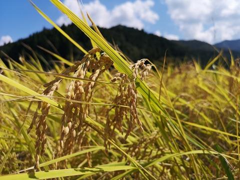 昔ながらの天日干し棚田米 3分づき1kg 5分づき1㎏ 無洗米1kg食べ比べセット