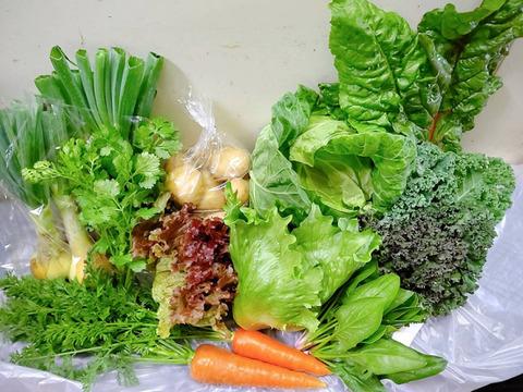 日常使用する野菜を中心とした野菜セット100サイズ