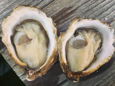 日本唯一の養殖真牡蠣 大入島オイスター【25~30個入】農林水産大臣賞受賞