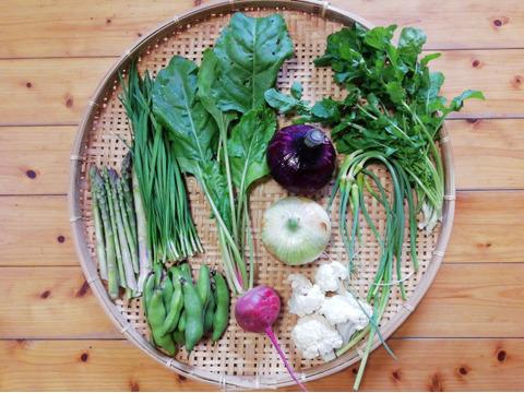 【農薬・化学肥料不使用】【クールで対応】おまかせ野菜セット【6~8種類の野菜】【60サイズ箱】