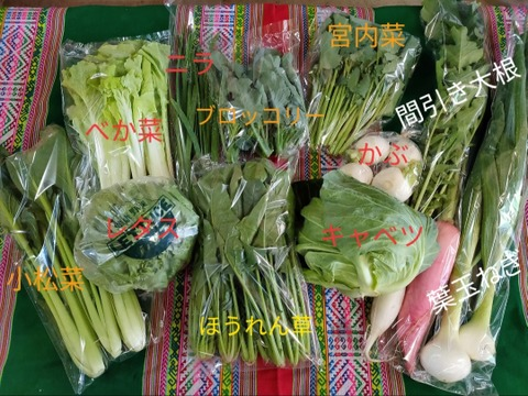 お楽しみ★農園自慢の情熱野菜セット 7袋 発送タイミングおまかせ フードロス対策 パチャママ農園