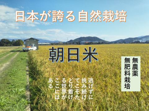 【限定5セット】 19年度産 自然栽培のお米(玄米5kg)昔の品種:朝日米