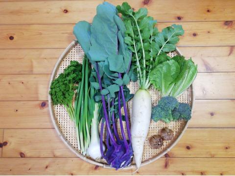 【農薬・化学肥料不使用】【クールで対応】野菜セット【黒ニンニク(50~70g)付き】【5~7種類の野菜】(60サイズ箱)