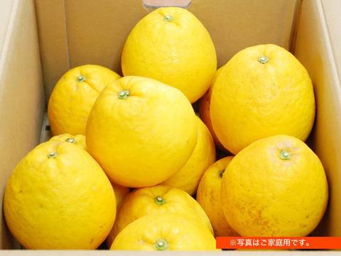 【完熟!】河内晩柑 3kg(約9個)