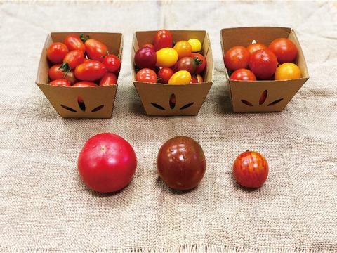 こだわりのトマト 食べ比べセット〈化学肥料・農薬不使用〉
