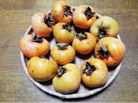 富有柿(2㎏前後)