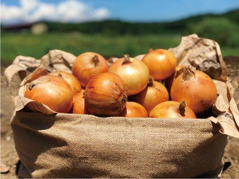 小サイズ やわらか甘みたっぷり玉ねぎ〈化学肥料・農薬不使用〉