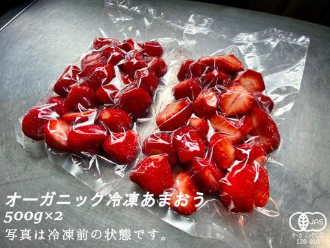 完熟!オーガニック冷凍あまおう 1kg(500g×2)