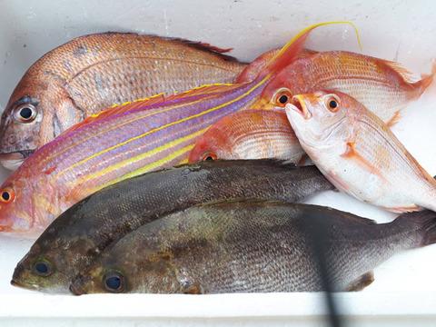 荒波に耐えた!天然糸島漁師に魚おまかせセット!(旬の魚)