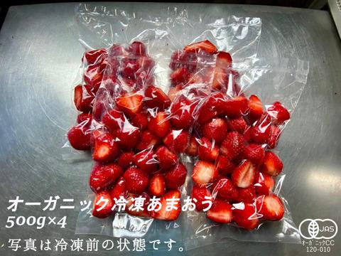 完熟!オーガニック冷凍あまおう 2kg(500g×4)