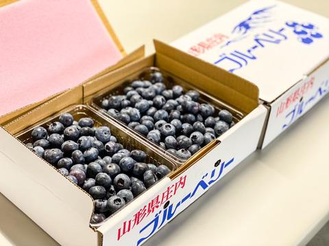【今が旬!7月限定】生ブルーベリー ご注文を受けてから収穫 500g×2パック