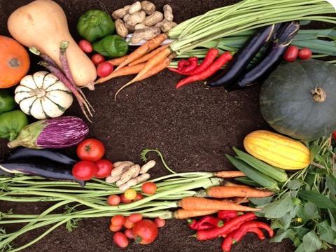 自然栽培(何も入れない)野菜セット(8品)+手前みそ増量(2kg)+お米(2kg)