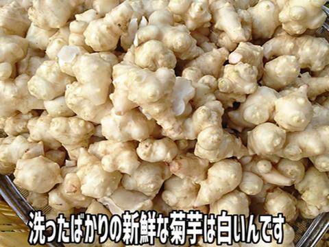 【予約販売】洗浄した生菊芋 2Kg