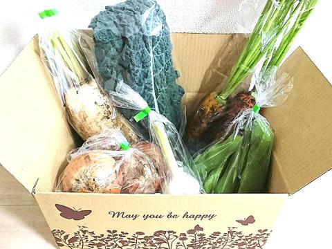 【農薬不使用】旬野菜Sセット(6種類前後)