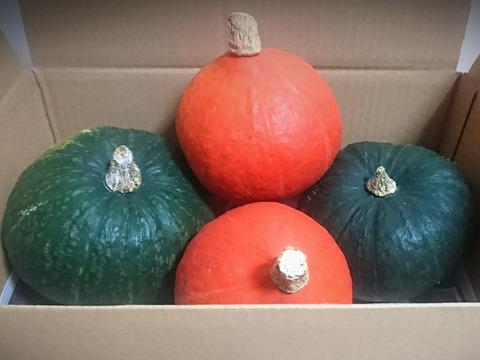 【農薬不使用】食べ頃かぼちゃ2種BOX!!皮まで安心まるごと美味しい(4個入り)