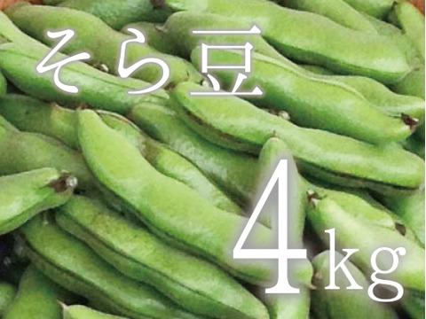 【(予約)5月限定!待ってましたこの季節♪】そら豆(さや付) 4kg