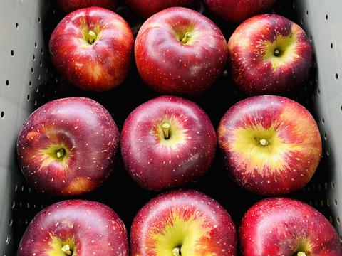 販売終了【秋りんご第1弾】色も濃い味も濃い 秋映3キロ箱 8〜14玉 商品ID42530