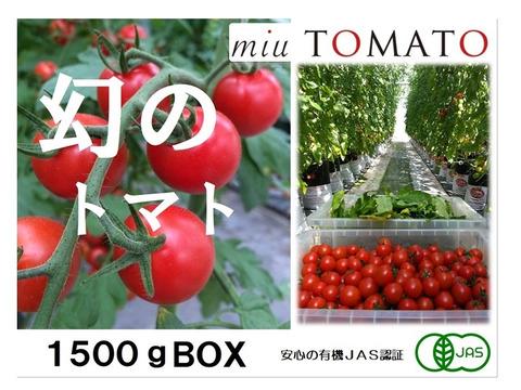 安心と安全を!名古屋の《極甘》有機栽培ミニトマト【飯田農園】miuトマト1500gパック