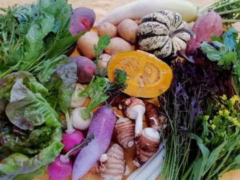 無農薬野菜セットL