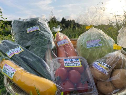 【栽培期間中農薬・化学肥料不使用】 樫村ふぁーむの旬の野菜BOX (Mサイズ6~8品目)