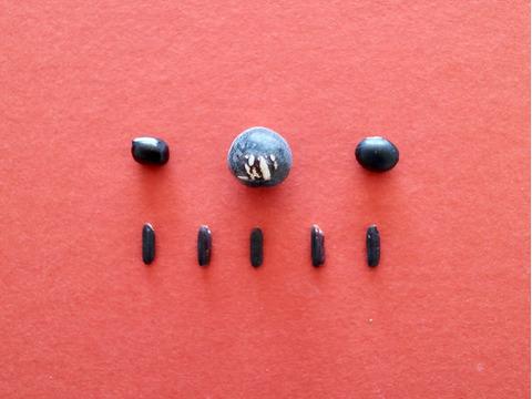 【漆黒セット】潤いも栄養もた〜っぷり、黒色セット(黒小豆、お徳用丹波黒大豆、小粒黒大豆、黒米)