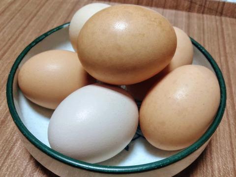 期間限定! 30個の卵をお買い得価格で! «日本三大地鶏»ぷりんっと濃い♪比内地鶏の平飼い卵30ヶ (春季産卵頻度増加による値引)【小分け対応可】