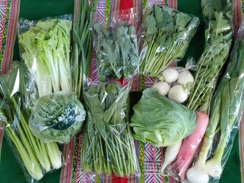 【初回限定BOX】農園自慢の情熱野菜セット7品目★Sセット パチャママ農園